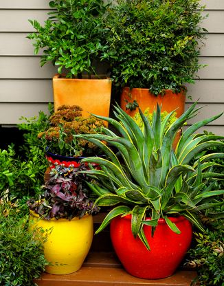 Related keywords suggestions for outdoor low maintenance for Low maintenance potted plants